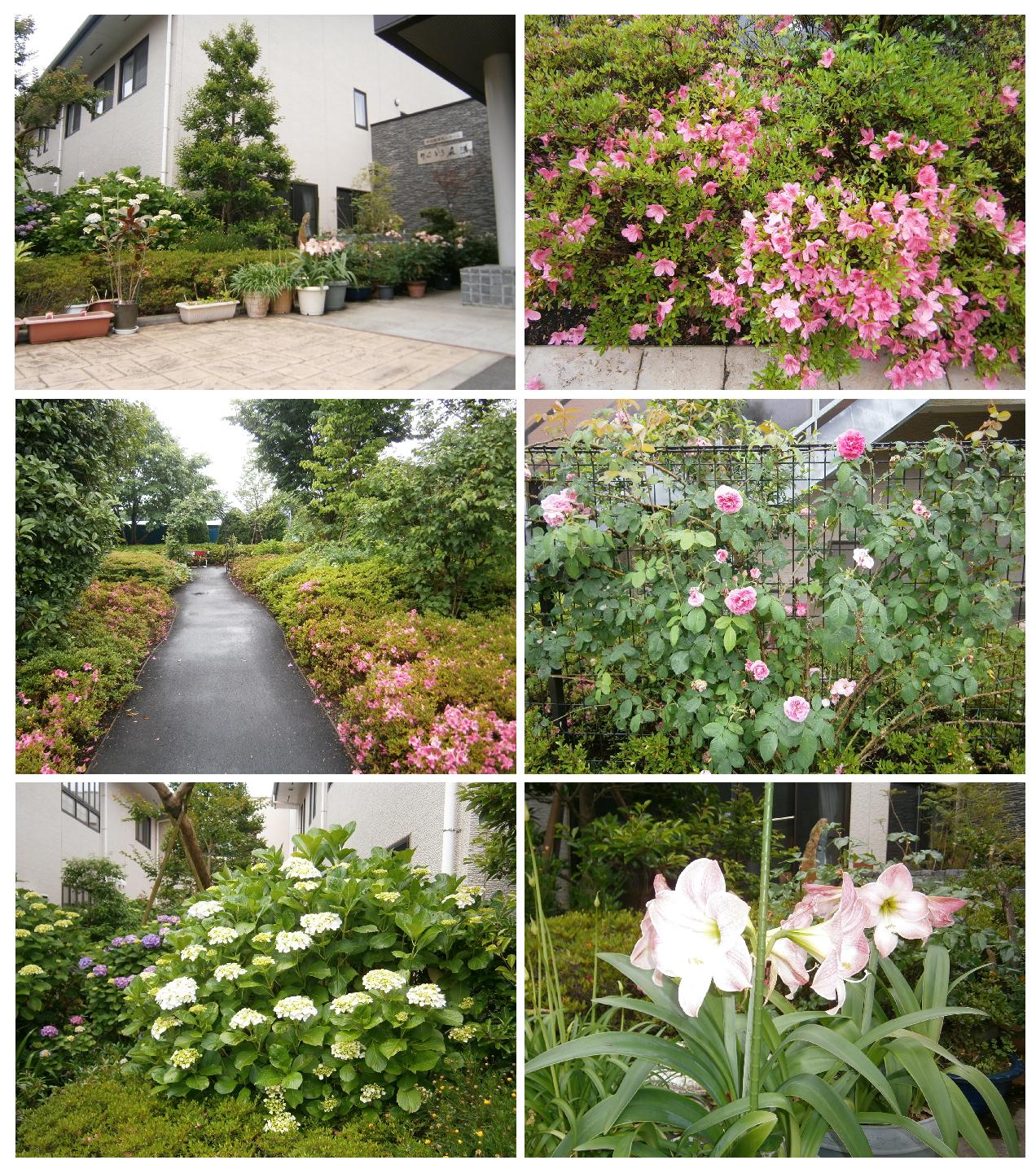 りんどう 庭園 平成28年6月